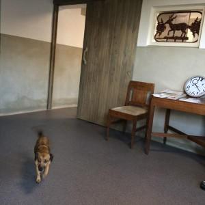 vloer-dierenarts-arnhem (5)